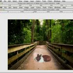 Optimize Image Loading Speed